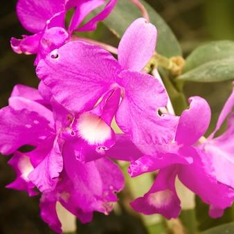 Bello primo piano del fiore viola