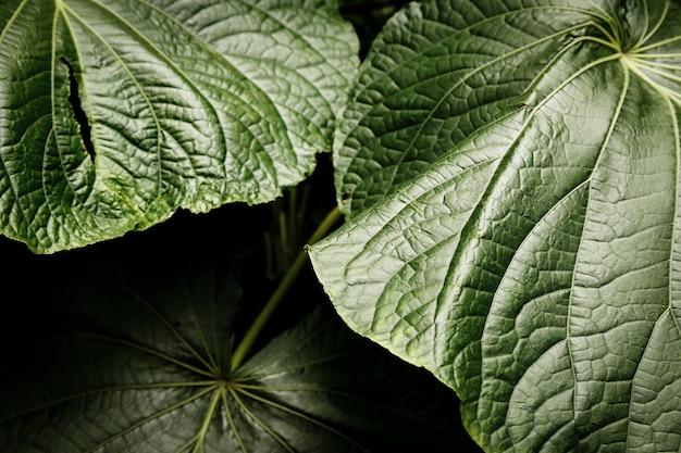 Bello primo piano delle foglie tropicali