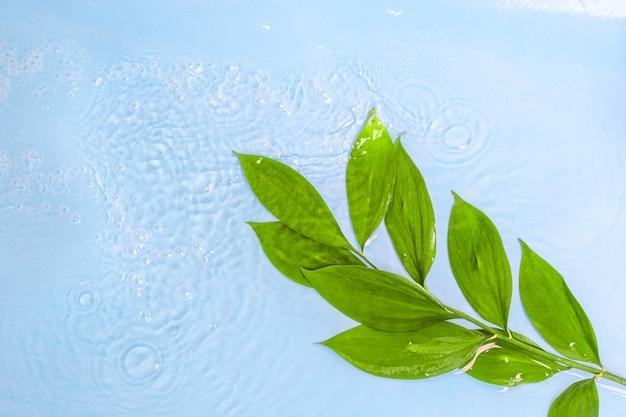 Bello ramo fresco con le foglie verdi con le gocce di acqua su fondo blu.