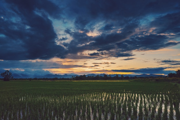 Bello tramonto scenico naturale del campo e nuvole di tempesta e fondo agricolo del campo verde