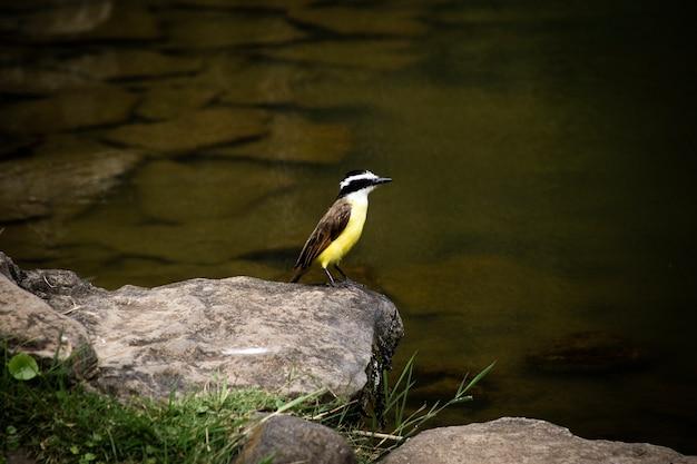 Bello uccello vicino al primo piano del fiume