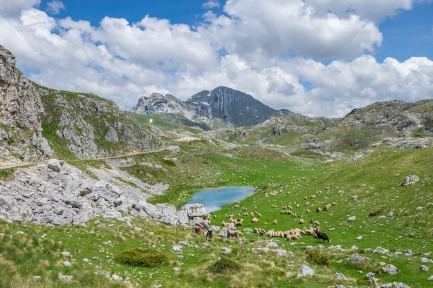 Bestiame al pascolo su un prato verde sulle rive del pittoresco lago di montagna.
