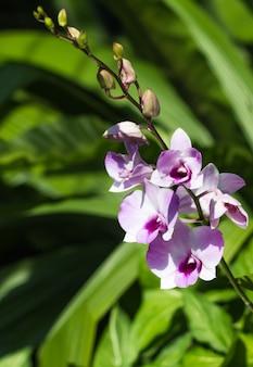 Bianco con fiori di orchidea viola con verde
