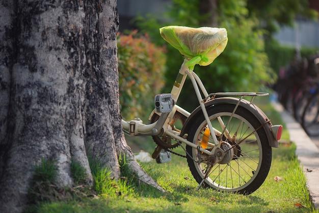 Bici parcheggiata dietro l'albero