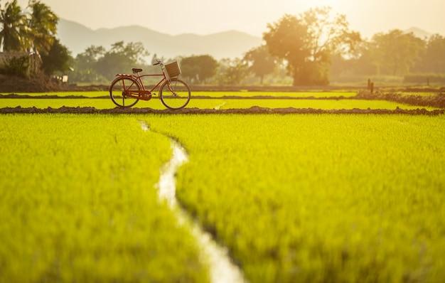 Bicicletta classica rossa di stile del giappone al campo verde