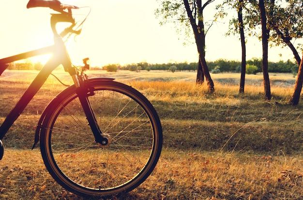 Bicicletta nella foresta di autunno al tramonto.