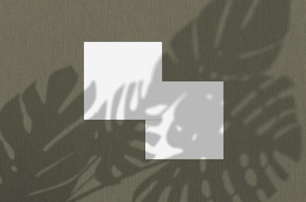 Biglietto da visita . l'illuminazione naturale della sovrapposizione ombreggia le foglie dei monstera. biglietti da visita quadrati. scena delle ombre della foglia su fondo verde.