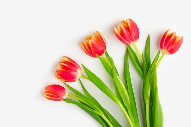 Biglietto di auguri con cornice di tulipani freschi su sfondo bianco.
