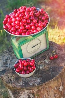 Bilancia ubriaca raccolta delle ciliegie
