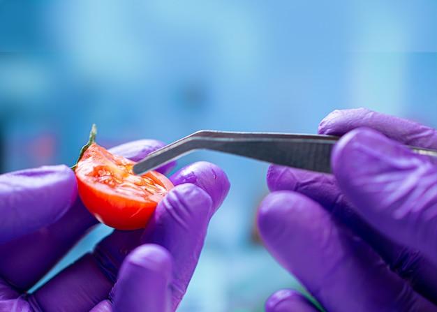 Biologo che esamina il pomodoro ciliegia per i pesticidi