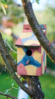 Birdhouse colorato su un albero