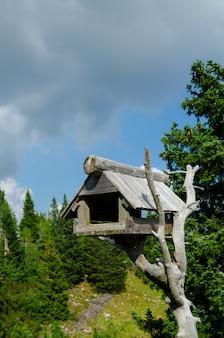 Birdhouse di legno grigio costruito su un vecchio ramo di albero.