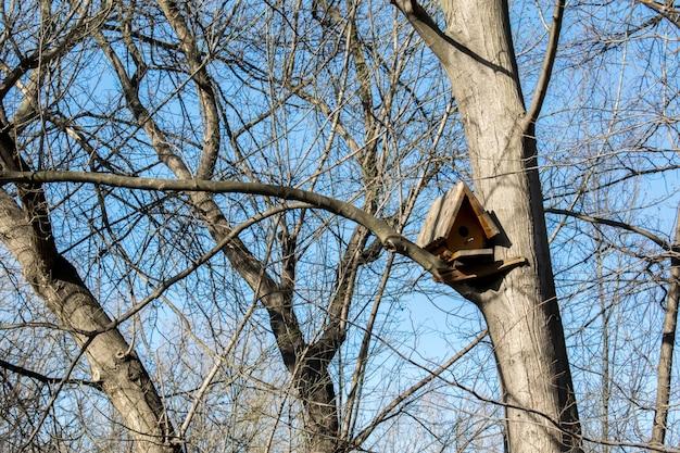 Birdhouse di legno su un albero nella foresta e nel parco