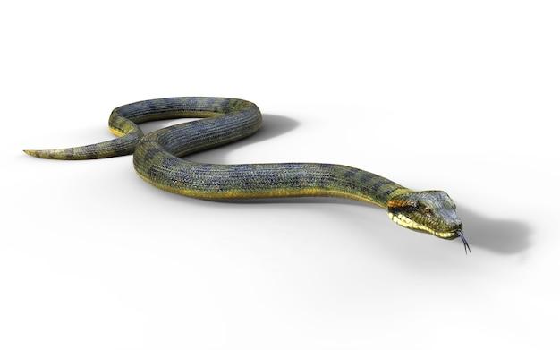 Boa constrictor il più grande serpente velenoso del mondo