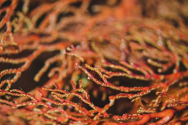 Bokeh arancione nelle barriere coralline