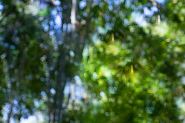 Bokeh della foresta di bambù di defocus