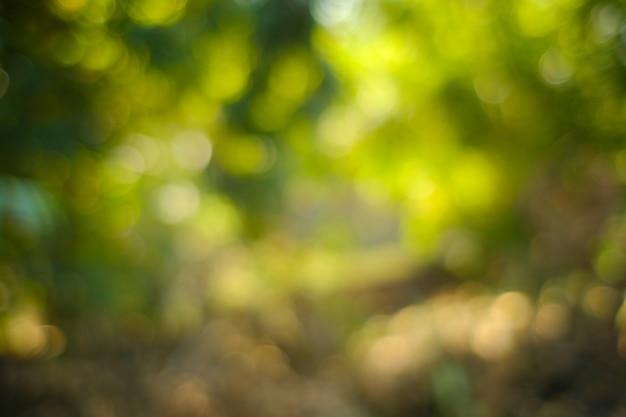 Bokeh della natura leggera, fondo blured, de focus. sole che splende attraverso le foglie degli alberi. fondo astratto della natura, bokeh verde della natura.
