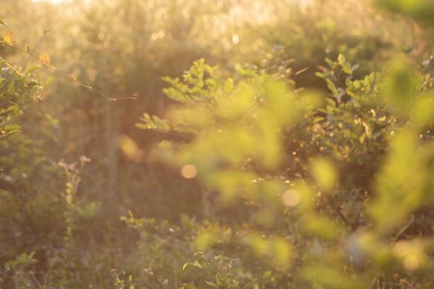 Bokeh delle foglie dell'albero per la priorità bassa della natura