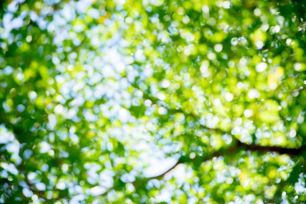 Bokeh di estate verde e blu per bellissimo sfondo