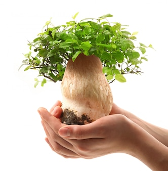 Bonsai di funghi nelle mani