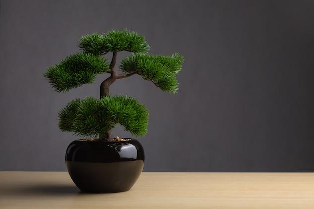 Bonsai sulla scrivania. lo sfondo è uno sfondo grigio scuro.