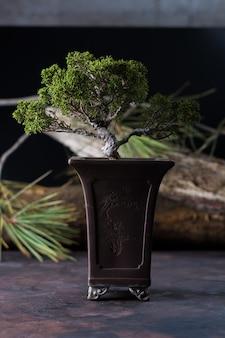 Bonsai, tipico della cultura giapponese