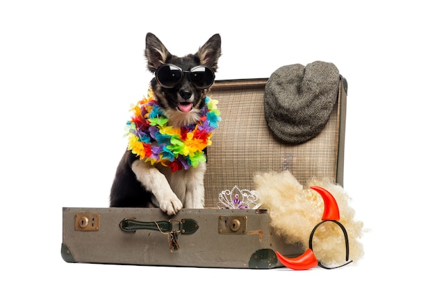 Border collie seduto in una vecchia valigia vintage piena di accessori