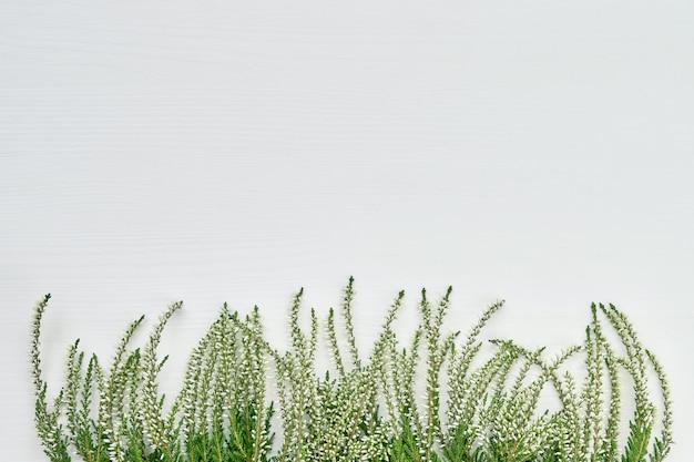 Bordo dei flawers dell'erica comune bianchi su priorità bassa bianca. copia spazio, vista dall'alto.