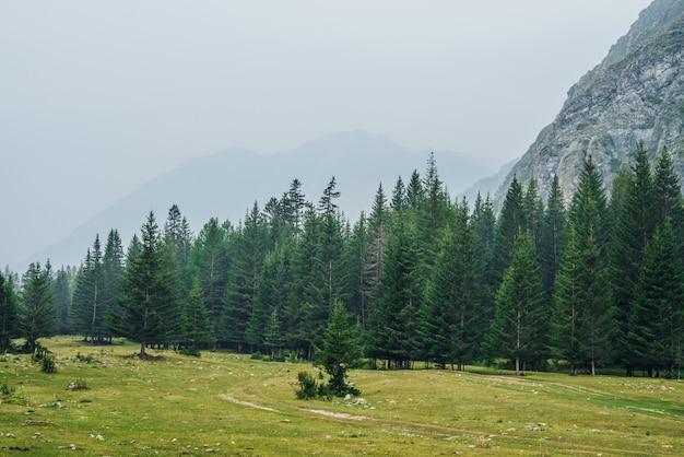 Bordo foresta di conifere e rocce
