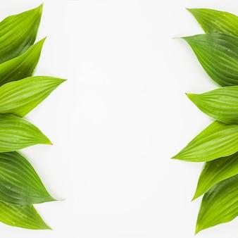 Bordo laterale realizzato con foglie verdi fresche su sfondo bianco