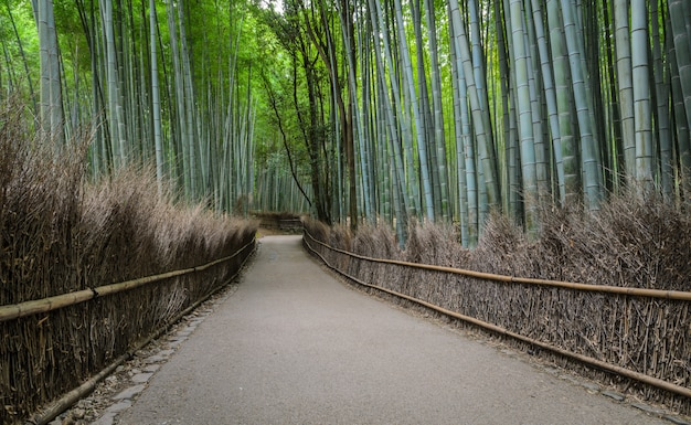 Boschetto di bambù verde a arashiyama a kyoto, giappone