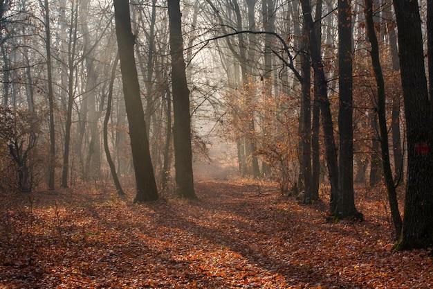 Bosco autunnale e alberi con foglie colorate
