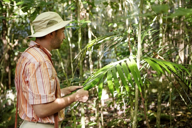 Botanico maschio in camicia a righe in piedi davanti alla pianta esotica verde, tenendo le sue grandi foglie e studiandole per le malattie mentre esplora le condizioni ambientali e i problemi nella foresta tropicale