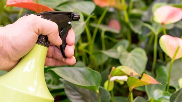 Bottiglia dello spruzzo della tenuta della mano del primo piano per le piante