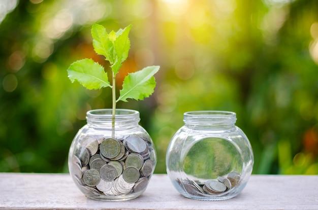 Bottiglia di denaro albero di banconote immagine della banca