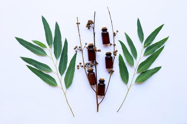Bottiglia di olio di eucalipto con foglie su sfondo bianco.