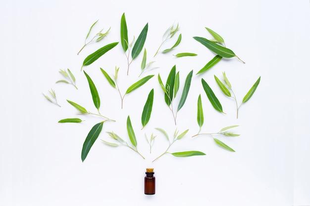 Bottiglia di olio essenziale di eucalipto con foglie su bianco.