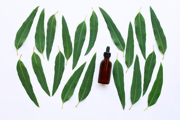 Bottiglie di olio di eucalipto con foglie di eucalipto su bianco