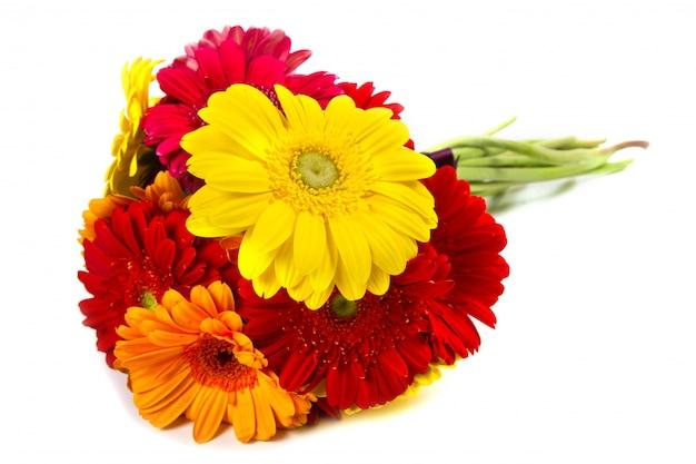 Bouquet di fiori colorati gerbera