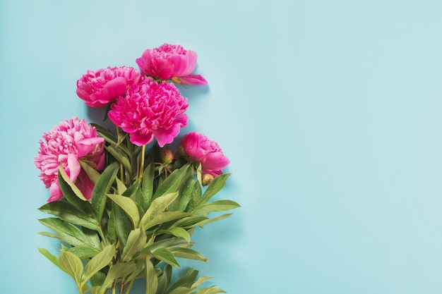 Bouquet di fiori di peonia rosa bella come cornice su blu pastello punchy.