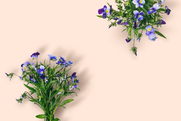 Bouquet di fiori viola selvatici su sfondo di colore pastello