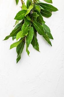 Bouquet di foglie di alloro fresche.
