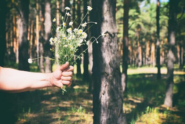 Bouquet di margherite bianche nella mano di un uomo