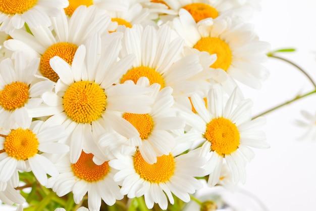 Bouquet di margherite selvatiche