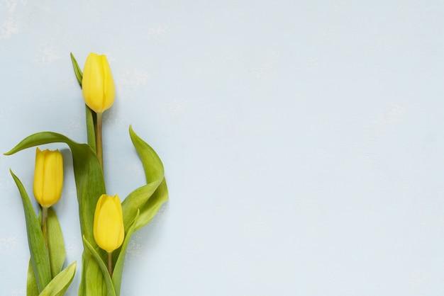 Bouquet di tre tulipani gialli su sfondo blu. festa della donna, concetto di saluto festa della mamma.