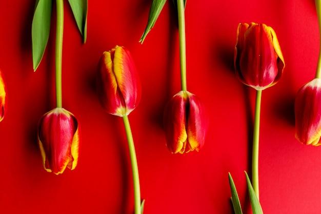 Bouquet di tulipani rossi. piatto con fiori, vista dall'alto con copyspace