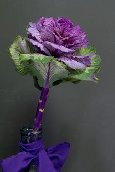 Brassica oleracea capitata o cavolo decorativo in un vaso di vetro con un nastro viola su uno sfondo grigio, cartolina d'auguri o concetto