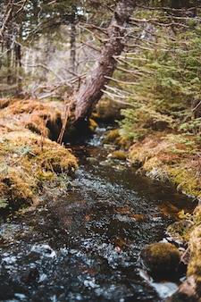 Brown ed erba verde sul fiume
