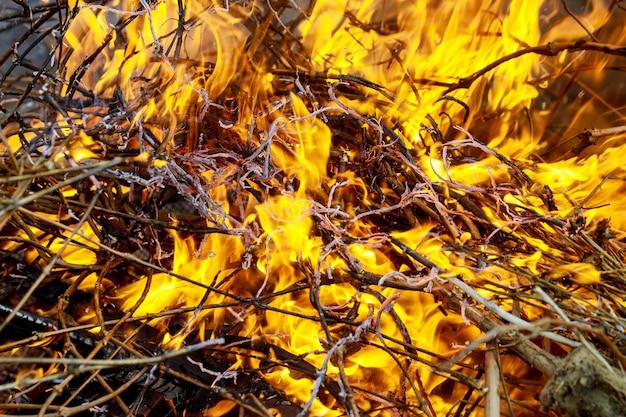 Bruci la fiamma e il fumo del fuoco residuo concetto globale di riscaldamento