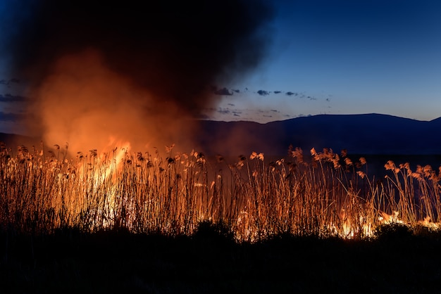 Brucia il fuoco di notte sulle canne. inquinamento da fumo